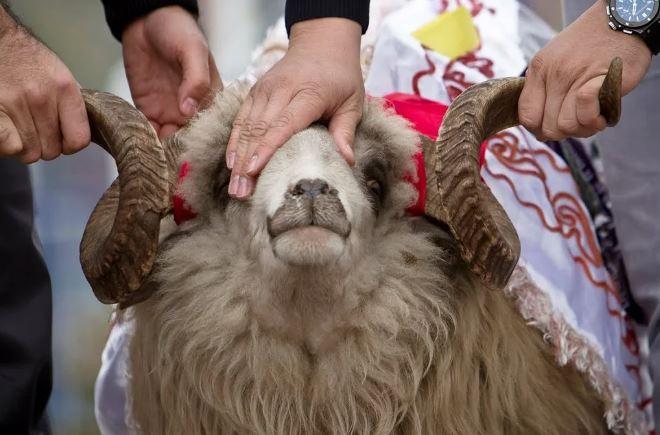 Курбан-байрам - праздник жертвоприношения